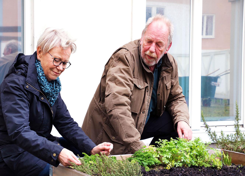 Ronny Andersson och Kristina Andersson gillar livet som stadsodlare. I sommar hoppas de på en minst lika bra skörd som förra året.
