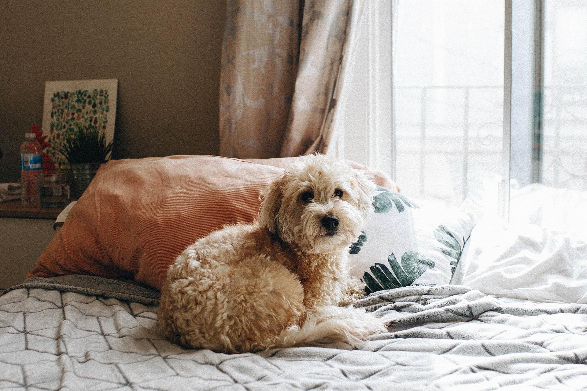 Tänk på att våra hundar är extra känsliga mot värmen. Ett tips är att köpa en kyldyna så hunden får en sval yta att vila på.