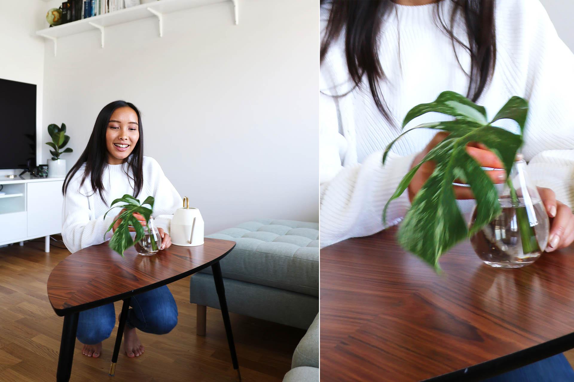 Hemma hos Olivia samsas 37 växter på hennes 36 kvadratmeter, plus några till på balkongen.