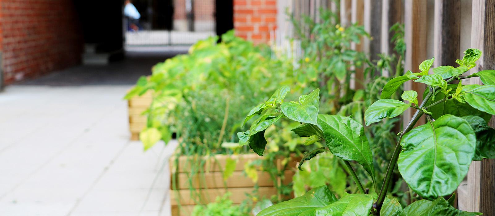 En pallkrage med gröna växter mot en husvägg