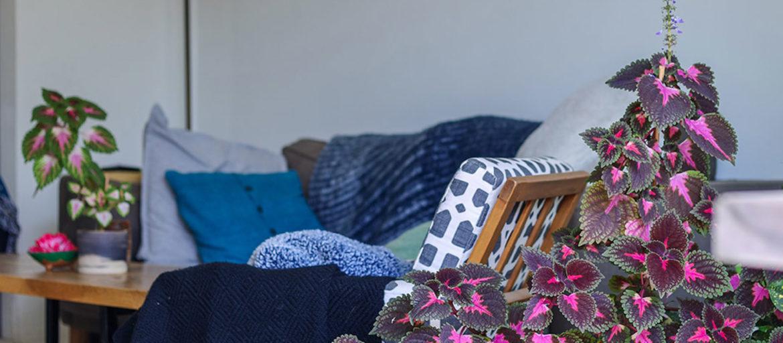 En blå soffa med två stora palettblad växter