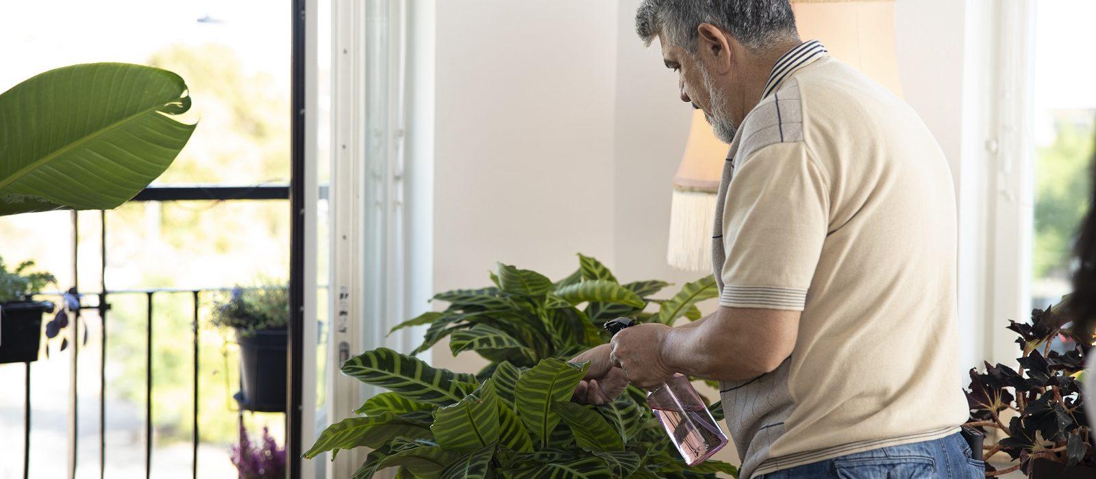 Lettstelte planter for deg uten grønne fingre