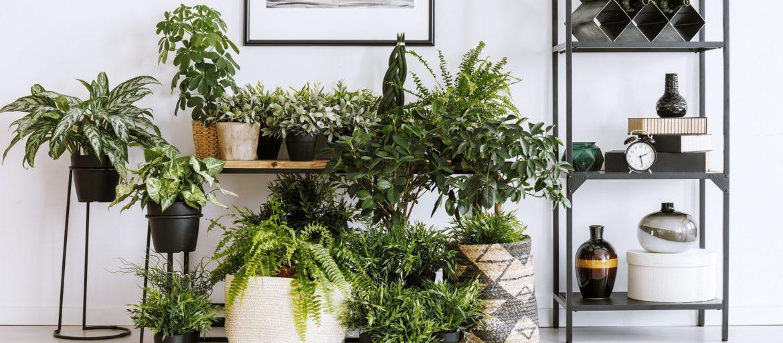 Slik potter du om plantene dine