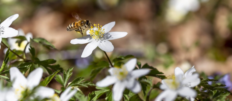 Planter som er bra for bier og miljøet