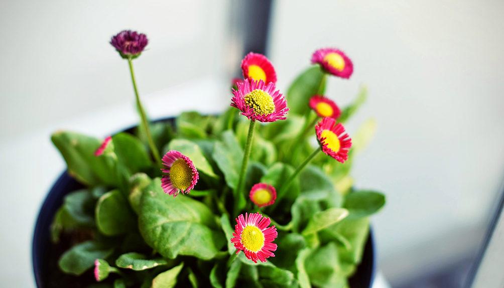 Blomstene du bør plante nå